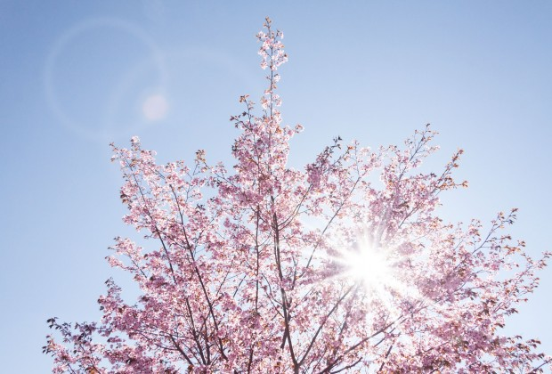 spring-733507_1920