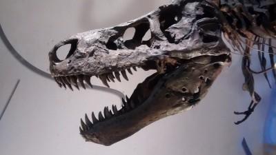 t-rex-768998_1920
