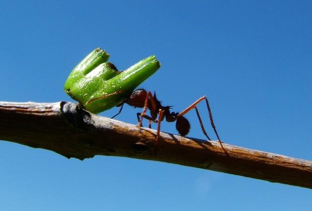 ants-803671_1280