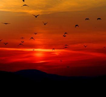 Farsudeste: Céu Vermelho